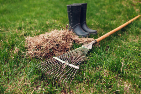 Cleaning lawn from dry grass with a rake in spring garden. Heap of grass with worker's boots and tool Banco de Imagens