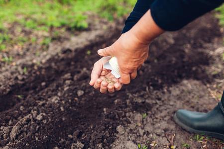 Mano dell'agricoltore che pianta un seme nel terreno. Senior donna semina prezzemolo nel giardino primaverile. Concetto di agricoltura