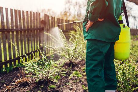 Granjero Senior rociar arbusto con rociador manual de pesticidas contra insectos en el jardín de primavera. Concepto de agricultura y jardinería Foto de archivo