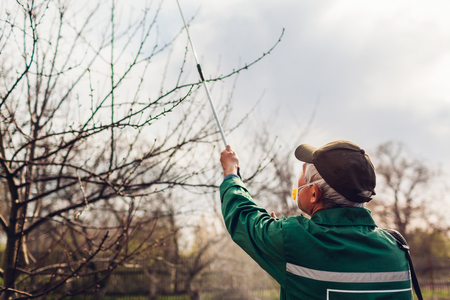 Senior farmer spraying tree with manual pesticide sprayer against insects in spring garden. Agriculture and gardening concept