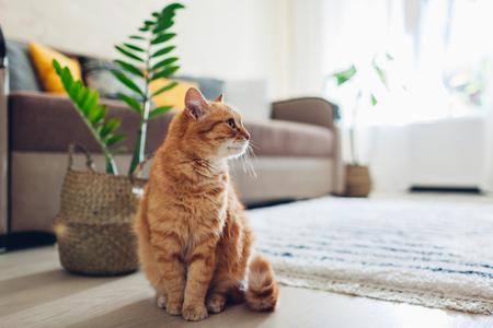 Chat roux assis sur le sol dans un salon confortable. Animal de compagnie qui se promène à la maison. Décoration intérieure