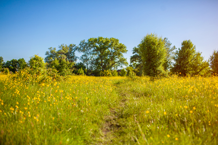 Spring field landscape. Rural path surrounded with grass and yellow flowers. Natural countryside background