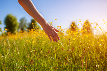Young woman walking in spring field at sunset among fresh grass and touching yellow flowers. Freedom and life balance