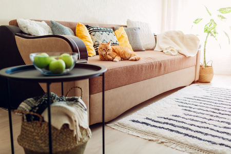 Ginger cat lying on couch in living room and cleaning paws. Cozy home interior decor Reklamní fotografie