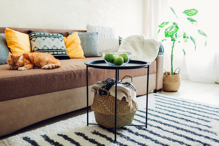 Cozy home interior decor of living room decorated with carpet, table, baskets. Ginger cat lying on couch in living room and cleaning paws Reklamní fotografie