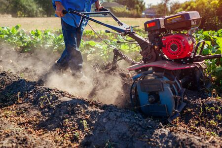 Farmer driving small tractor for soil cultivation and potato digging. Autumn harvest potato picking. Gathering fall crop in countryside Archivio Fotografico