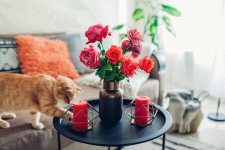 Innenraum des Wohnzimmers verziert mit Blumen auf Couchtisch und Katze, die auf Couch geht und spielt. Strauß bunter frischer Rosen