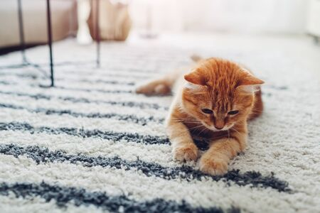 Ginger cat lying on floor carpet at home. Pet playing with rug and having fun 写真素材