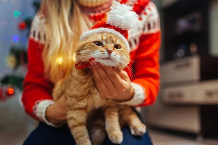 Woman puts Santas hat on ginger cat by Christmas tree. Having fun with pet at home for holidays. Christmas and New year concept