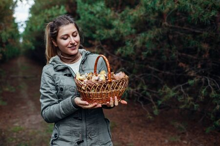 Woman holds basket of oily mushrooms in autumn forest. Picking up fresh organic Slippery Jack mushrooms. Fall activities Stockfoto