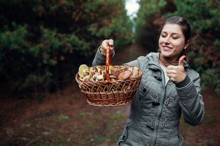 Woman holds basket of oily mushrooms in autumn forest. Picking up fresh organic Slippery Jack mushrooms. Woman shows thumb up