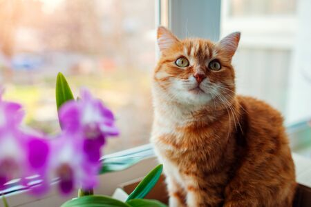 Ginger cat sitting in carton box on window sill at home. Pet relaxing by flowers plants