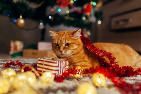 Ginger cat playing with garland and gift box under Christmas tree at home. Christmas and New year concept