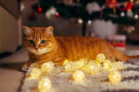 Ginger cat playing with garland under Christmas tree at home. Christmas and New year concept