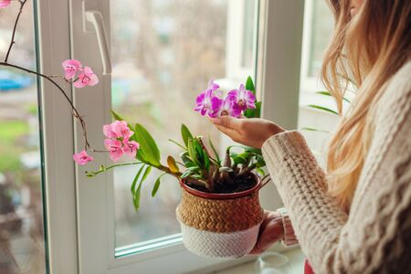 Dendrobium orchid and bougainvillea. Woman taking care of home plats. Woman holding pot in basket with flowers. Interior decor Stockfoto