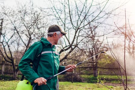 Senior farmer man spraying tree with manual pesticide sprayer against insects in spring garden. Agriculture and gardening concept