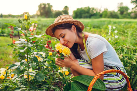 Young woman smelling flowers in garden. Gardener picking cutting roses off with pruner for bouquet. Summer gardening work Archivio Fotografico - 152824635