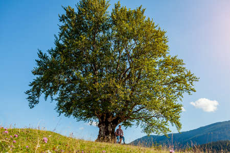 Man tourist hiker sitting under big single tree enjoying nature landscape. Trip to Carpathian mountains. Traveling in summer Ukraine.