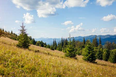 Beautiful view of Carpathian mountains. Summer ukrainian landscape. Blue sky above wild nature. Fir tree forest.Tourism