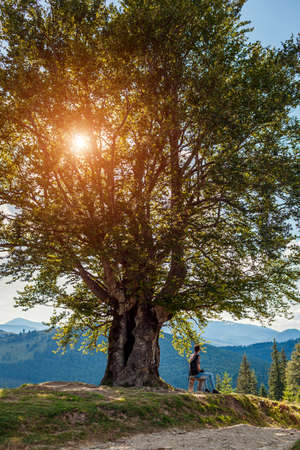 Man traveler hiker sitting under big single tree enjoying nature landscape. Trip to Carpathian mountains. Traveling in summer Ukraine.
