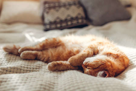 Ginger cat relaxing on couch in living room surrounded with cushions. Pet having good time at home 免版税图像