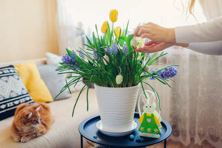 Easter home decor. Woman hangs eggs on spring blooming flowers in pot. Yellow hyacinths, tulips, muscari in blossom grow on table by bunny.