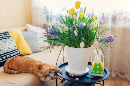 Easter decoration. Cat playing with eggs by spring flowers blooming in pot at home. Pet having fun on couch. Holiday interior