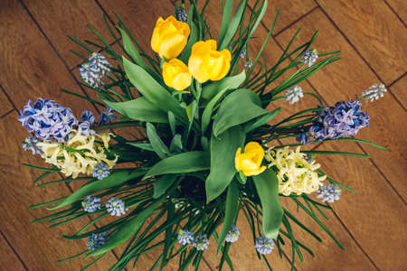 Bouquet of spring flowers. Yellow tulips, hyacinths, blue muscari grow in pot. Holiday decoration. Top view