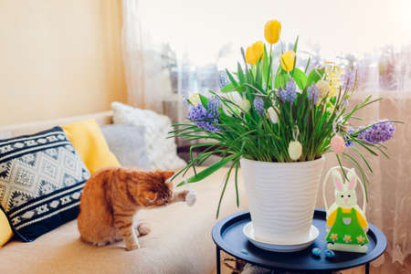 Easter decoration. Ginger cat playing with eggs by spring flowers blooming in pot at home. Pet having fun on couch in living room. Holiday interior 版權商用圖片