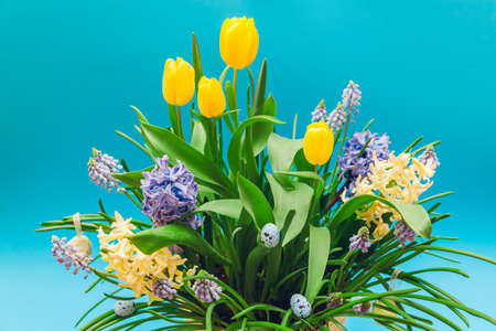 Easter decor of spring flowers with eggs. Bouquet of yellow tulips, hyacinths, blue muscari on blue background. Holiday decoration.