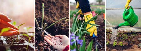 Spring agriculture gardening collage. Fertilizing planting growing seedlings taking care of flowers watering sprouts in greenhouse