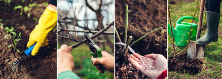 Spring agriculture gardening collage. Transplanting fertilizing growing seedlings pruning tree soil digging. Earth day