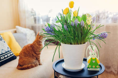 Easter decoration. Cat looking at pot with spring flowers and bunny on table at home. Pet relaxing on couch. Cozy holiday interior 版權商用圖片