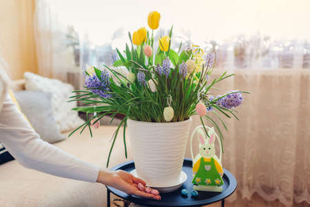 Easter home decor. Woman puts eggs by spring blooming flowers in pot. Yellow hyacinths, tulips, muscari in blossom grow on table by bunny. 版權商用圖片