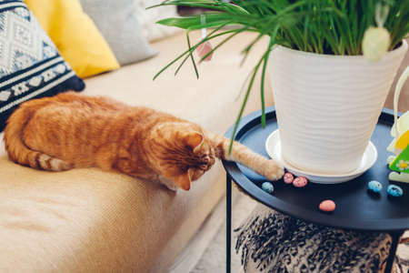 Easter decoration. Cat playing with eggs by spring flowers blooming in pot at home. Pet having fun on coffee table. Holiday interior design 版權商用圖片