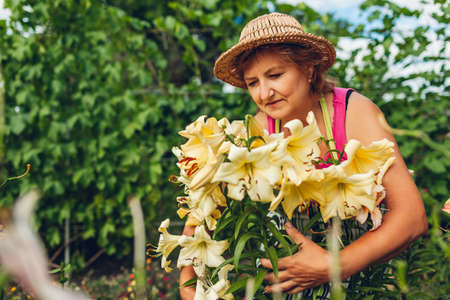 Senior woman taking care of flowers in garden. Middle-aged gardener smelling hugging yellow lilies. Summer gardening Archivio Fotografico