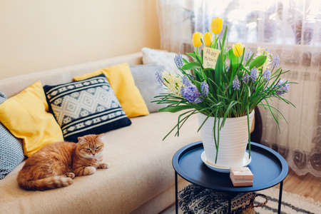 Mother's day present. Pot with blooming spring yellow and blue flowers, gift box and greeting card waits for mom with cat at home. Surprise for holiday with 2021 colors