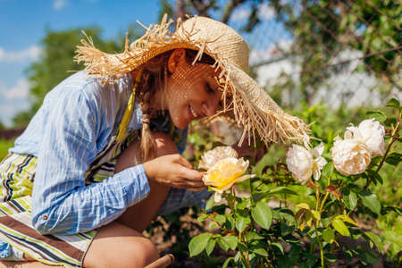 Young gardener enjoys blooming roses flowers in summer garden. Woman smells English Graham Thomas yellow rose