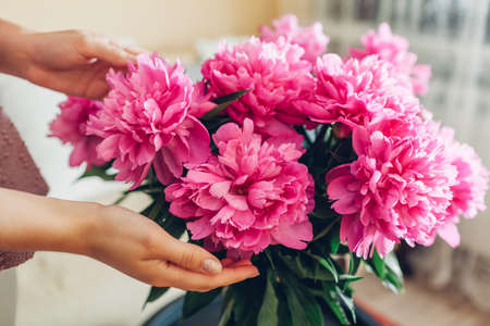 Bouquet of fresh peonies in vase at home. Close up of pink blooms. Interior and summer decor of living room