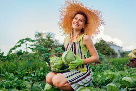 Young happy woman gardener picking cabbage in summer garden putting vegetable crop in basket. Organic vegetables harvest. Healthy food Archivio Fotografico