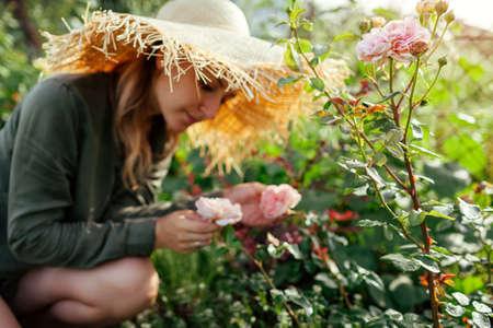 Gardener woman smells pink rose Abraham Darby blooming in summer garden. English David Austin selection roses flowers. Archivio Fotografico
