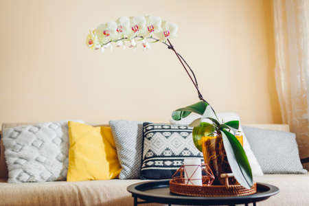 Interior of living room. Yellow orchid with cascade blossom blooming on coffee table by candle. Home decorated with flowers and plants