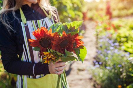 Woman gardener holds bouquet of orange brown sunflowers in summer garden. Cut flowers harvest for bouquets