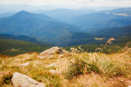 Top view of summer mountain landscape in Ukrainian Carpathians with grass among rocks. Natural field meadow background Archivio Fotografico