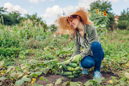 Happy woman farmer harvesting cucumbers in garden. Young gardener picking vegetables in basket. Growing healthy food on small farm