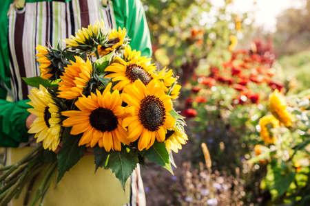 Woman gardener holding bouquet of yellow lime sunflowers with dark center in summer garden. Cut flowers harvest picking. Close up Foto de archivo