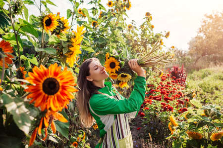 Woman gardener holds bouquet of yellow sunflowers in summer garden smelling cut flowers harvest in the morning on flower farm