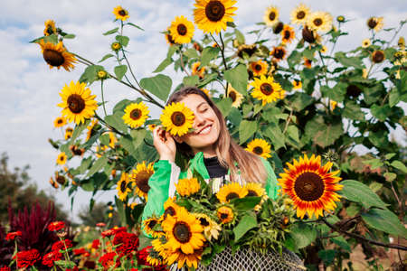 Happy woman gardener holding bouquet of yellow sunflowers in summer garden. Picking cut flowers harvest in metal basket. Foto de archivo