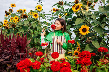 Portrait of woman gardener picking red zinnias in summer garden using pruner surrounded with sunflowers. Cut flowers harvest. Growing organic plants