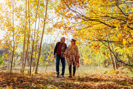Fall season walk. Senior family couple walking in autumn park. Happy man and woman spending time together outdoors Foto de archivo